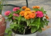 help you make money with your flower and vegetable garden(s).